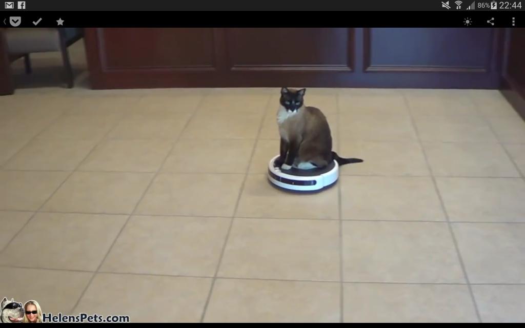 Klicka för att se en katt-som-åker-runt-på-dammsugare-film
