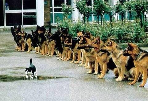 courageous-cat2